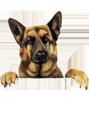 εκπαιδευση σκυλου στο footer