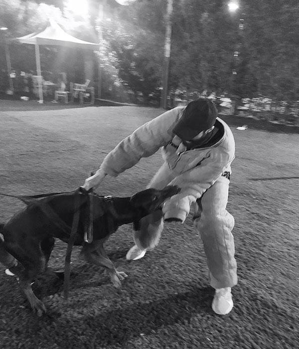 εκπαίδευση σκύλου στον διονυσο