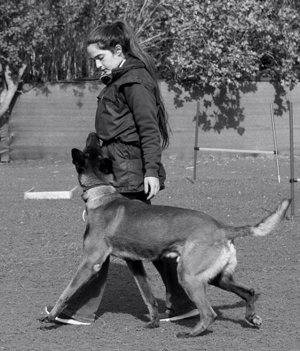 εκπαίδευση σκύλου στα βορεια προαστια
