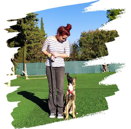 Διόρθωση συμπεριφοράς σκύλου