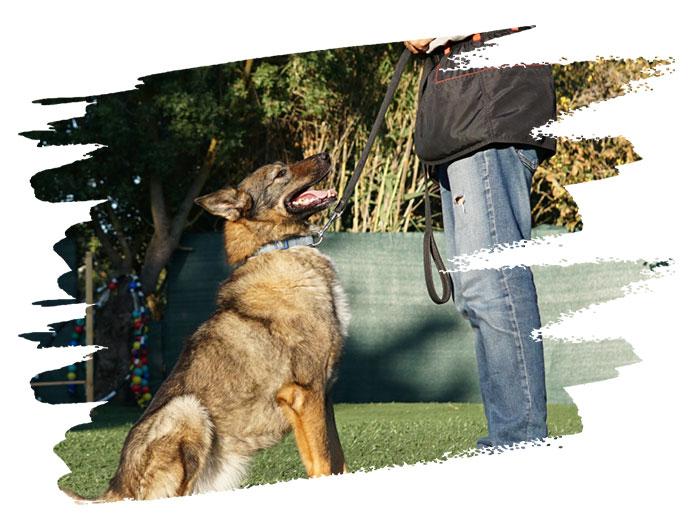 εκπαίδευση σκύλου φυλακα στα βορεια προαστια