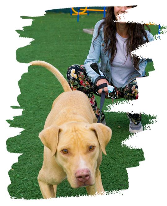 Ισορροπημένη σχέση κηδεμόνα - σκύλου